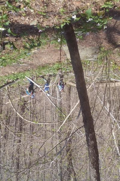 July FSO Hike - Blue Ridge Mtns