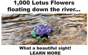 The Floating Lotus