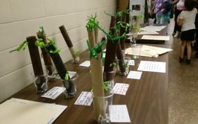 Elementary Students Showcase TIC and STIC at Spring Exhibition of Learning
