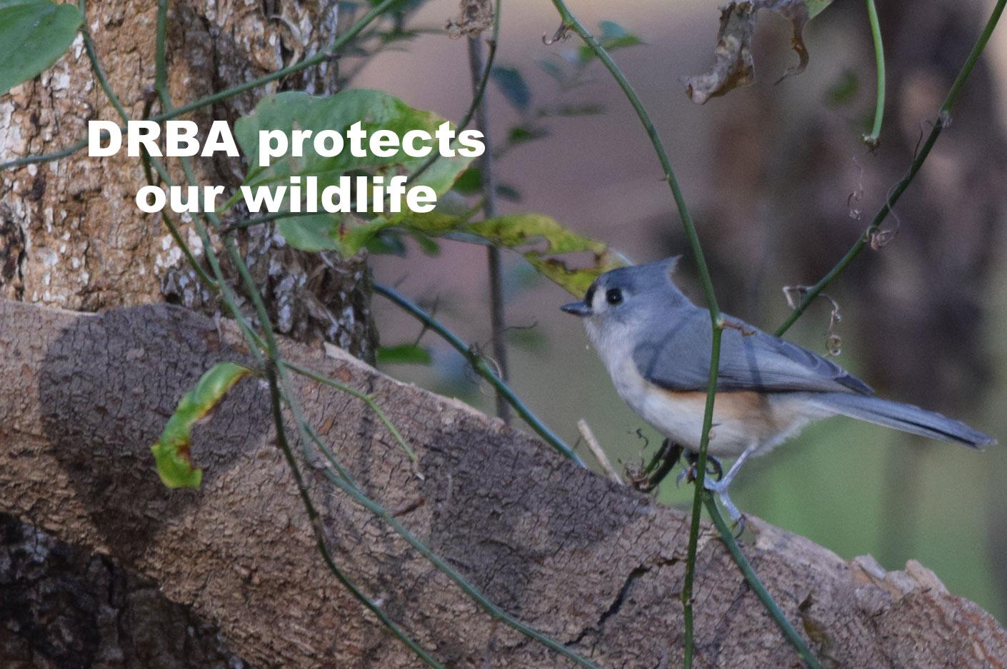 DRBA Protects Our Wildlife