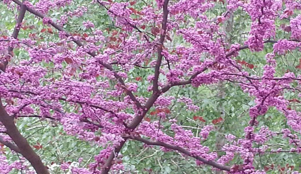 springspray