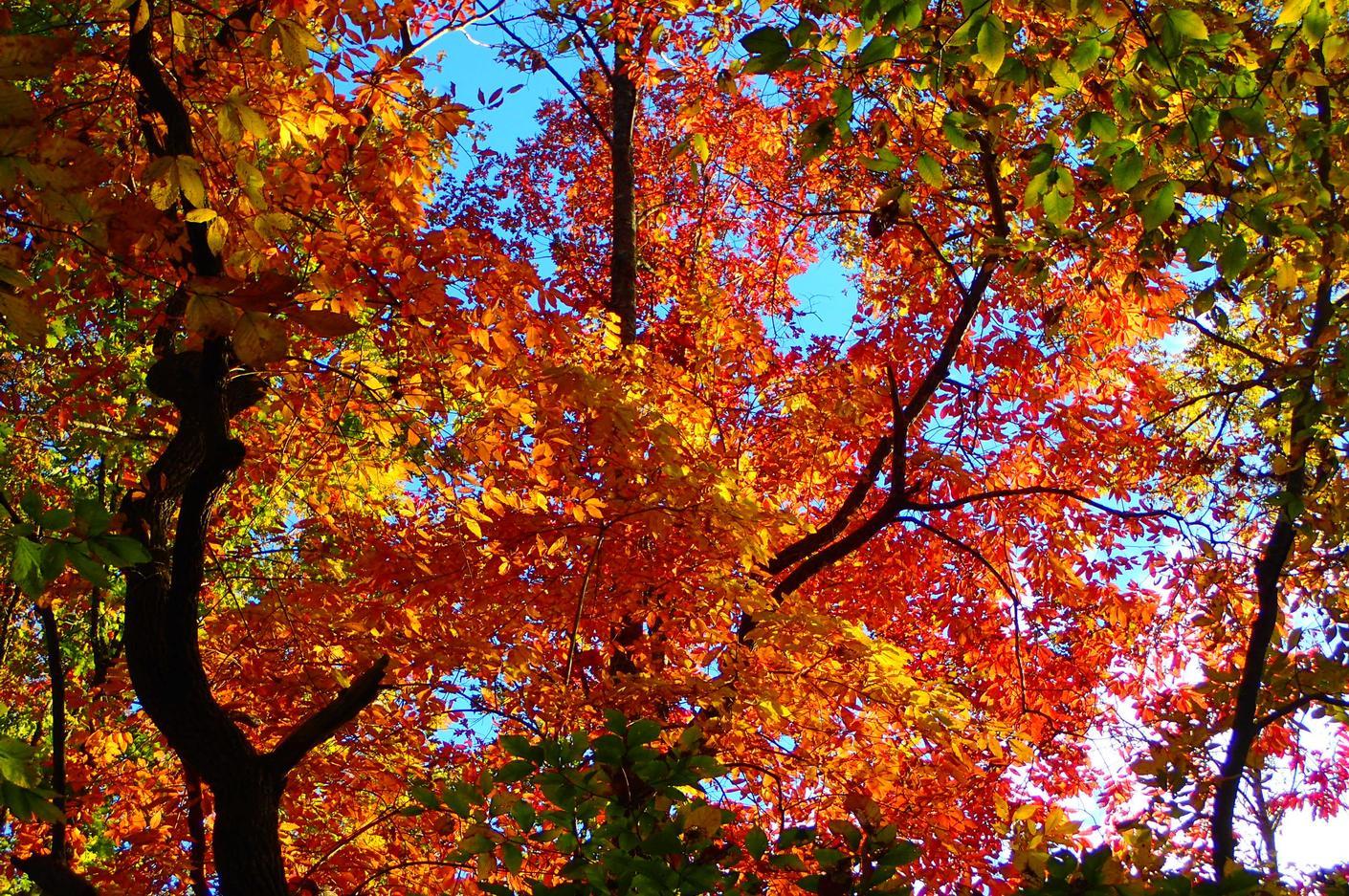 fall20176